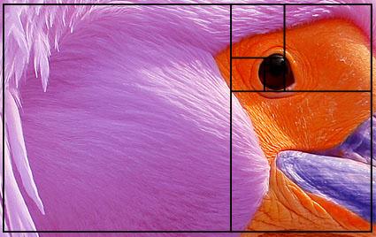Comment réussir les photos : suite de Fibonacci régles de cadrage