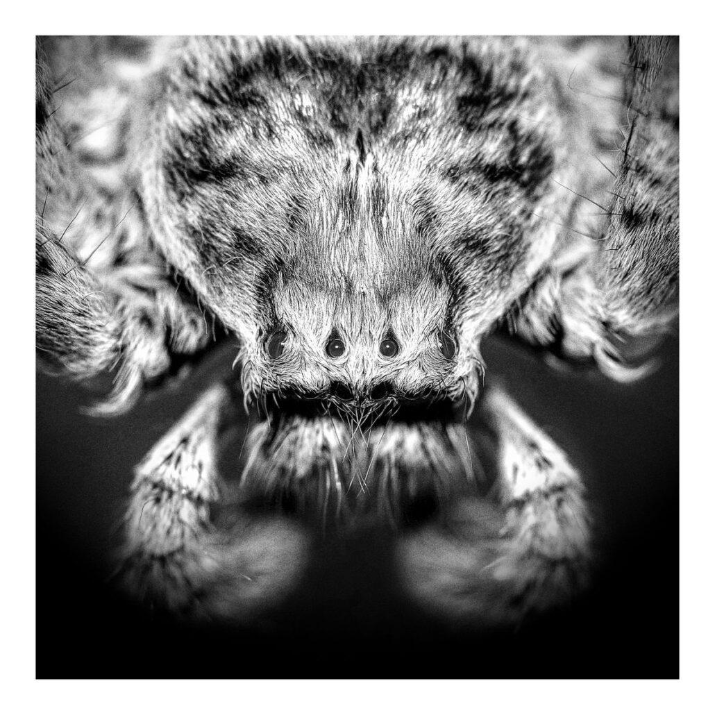 """Macrophotographie """"Tête d'araignée"""""""""""