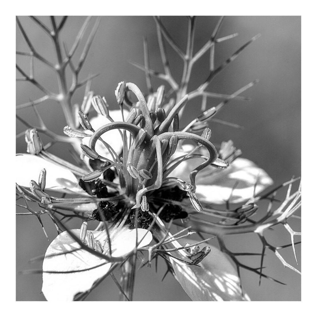Fleur en monochrome