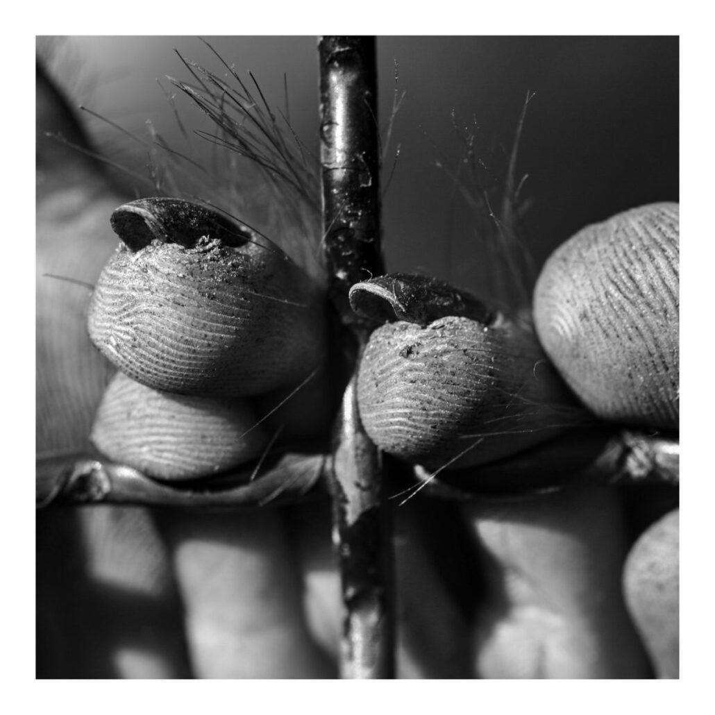 Main de singe derrière les barreaux